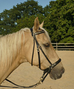 Wirkungsweise Bitless Bridle