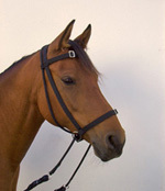 Anlegen eines Bitless Bridle