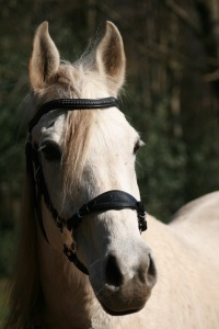 "Hackamore-Zaum Super Soft ""Mandy"""