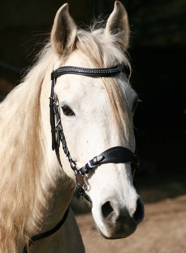 "Hackamore-Zaum Super Soft ""Crystal"""